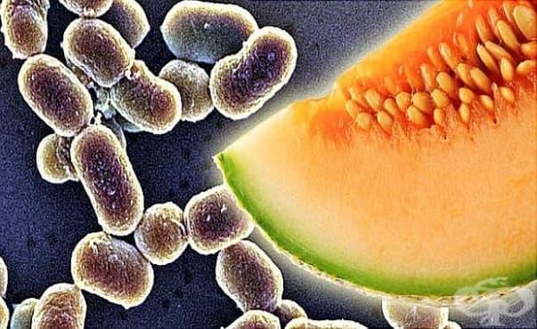 В Южна Африка има епидемия от листериоза - изображение