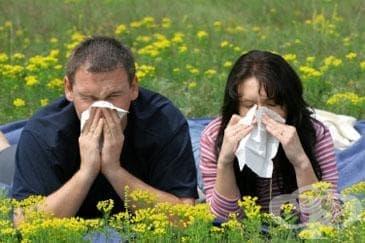 Изследваме се безплатно за алергии и астма - изображение