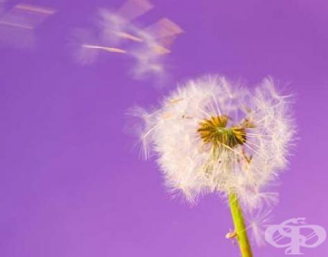 Все повече българи страдат от алергии - изображение