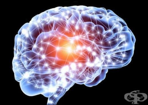 Недостигът на специфичен протеин може да предизвика аутизъм  - изображение