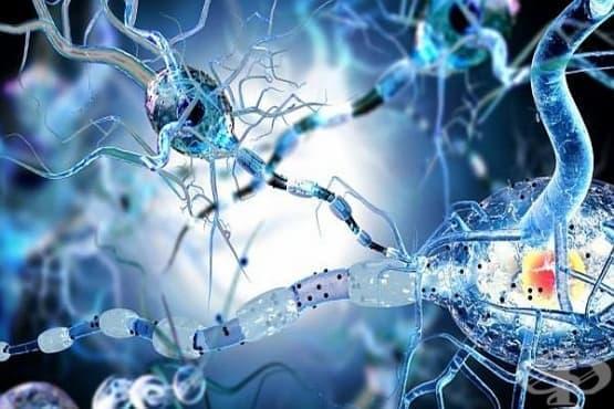 Учени направиха огромен пробив в лечението на Болестта на Хънтингтън - изображение