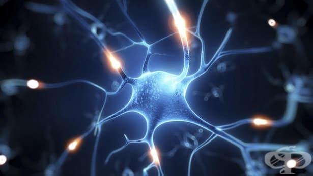 Учени създадоха по изкуствен път мозъчна клетка от кожна - изображение