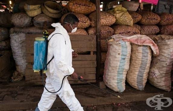 Над 140 души са жертвите на чума в Мадагаскар - изображение