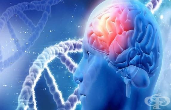 Специалисти откриха лечение на всички мозъчни заболявания  - изображение