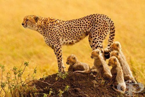 Специалисти отчетоха сериозен спад в популацията на диви животни - изображение
