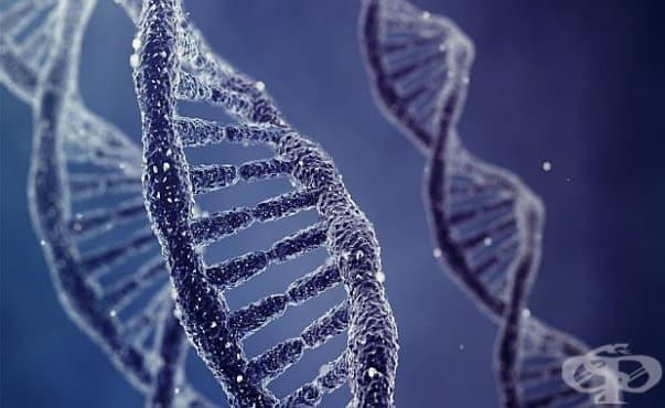 Международен екип с участието на български учени откри как и кои белтъци поправят ДНК - изображение