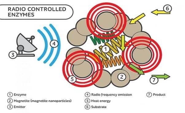 Учени успяха да повишат активността на ензими чрез радиочестотно излъчване - изображение