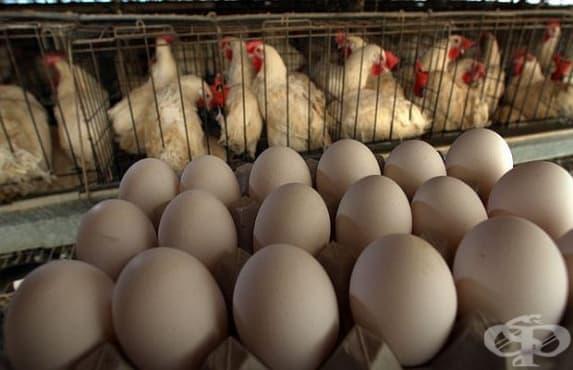 Над 300 птицеферми в Холандия остават затворени поради наличие на фипронил - изображение