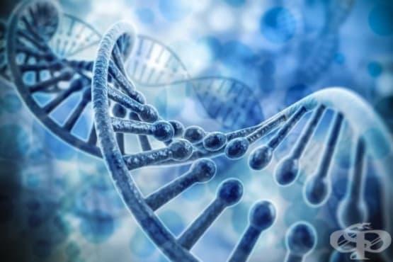 Откриха ген, причиняващ внезапна смърт при млади хора - изображение