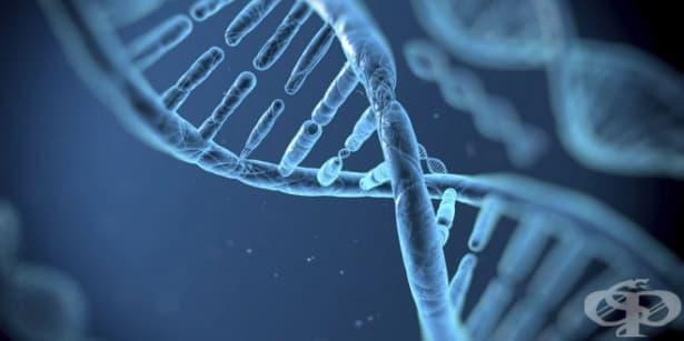 Гените, предразполагащи към по-високо ниво на образование, са в период на западане - изображение