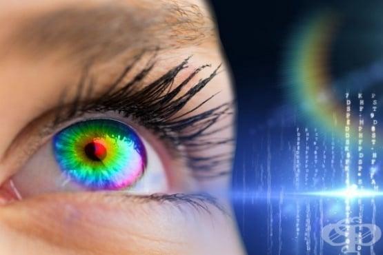 Генна терапия и новооткрит фоточувствителен протеин MCO1 opsin възстановяват зрението при лабораторни мишки  - изображение
