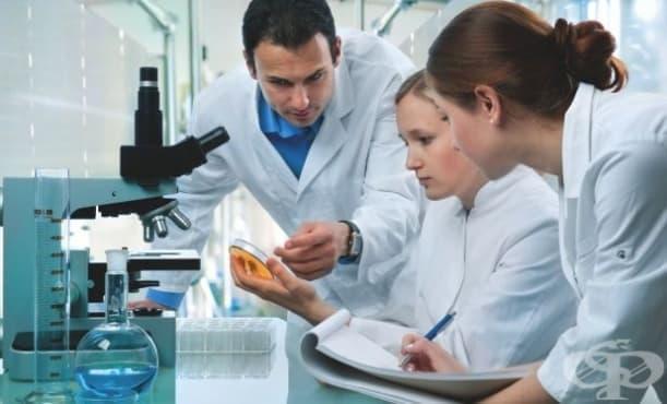 Устойчива на антибиотици гъбичка се разпространява по света - изображение