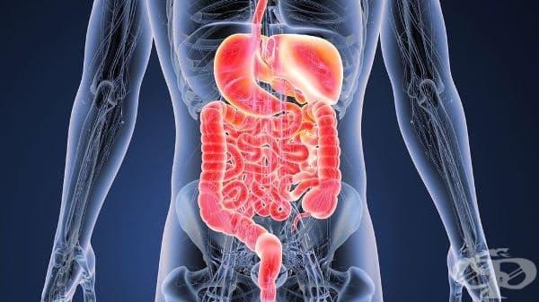 Полски учени създадоха неинвазивен тест за скрининг и мониторинг на чревни заболявания - изображение