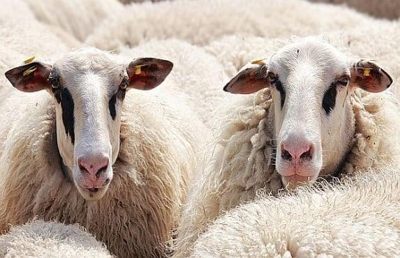 Хора масово се лекуват с антифлегмин от ветеринарната аптека - изображение