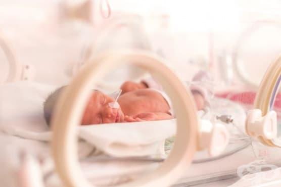 """Холандски учени разработват """"изкуствена утроба"""" за недоносени бебета - изображение"""