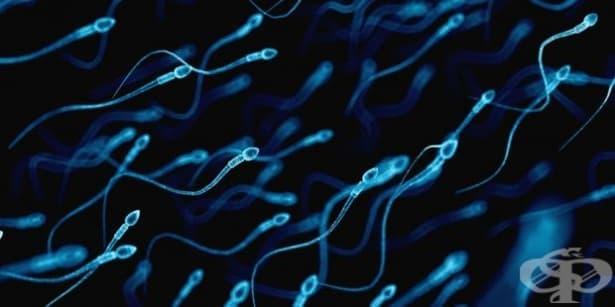 Средно с 52% са намалели сперматозоидите при мъжете през последните 40 години - изображение