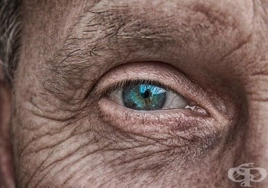 Международен екип от учени идентифицира протеин, свързан с развитието на макулна дегенерация - изображение
