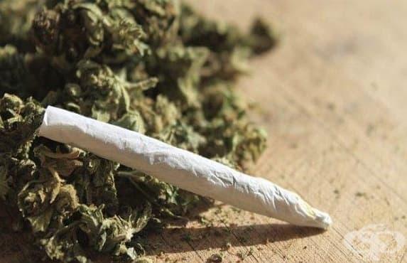Първи смъртен случай от предозиране с марихуана в света - изображение