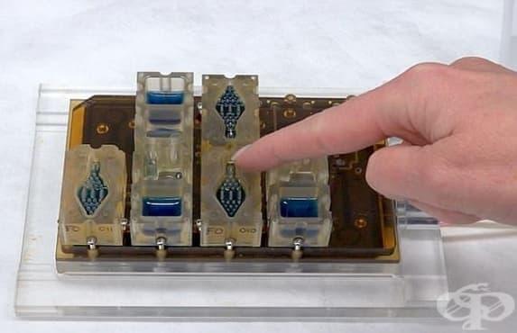 Създадоха първия в света менструален цикъл на чип - изображение