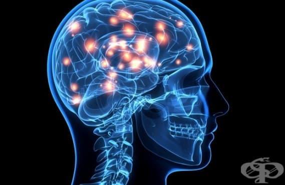 Нови открития за мозъка преобръщат представите ни за него - изображение