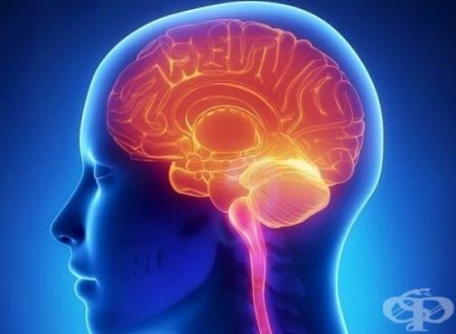 """Установиха, че """"клетките – чистачи"""" на мозъка се обновяват - изображение"""