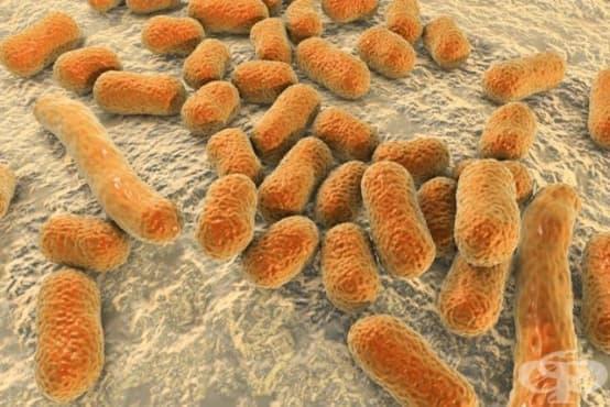 Невинаги лекарствата са виновни за антибиотичната резистентност - изображение