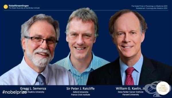 Уилям Кейлин Грег Семенза и сър Питър Ратклиф са носителите на Нобелова награда за медицина за 2019 г. - изображение