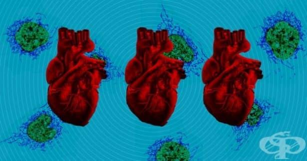 Нов вид трансплантация дава шанс на децата с увредени сърца - изображение
