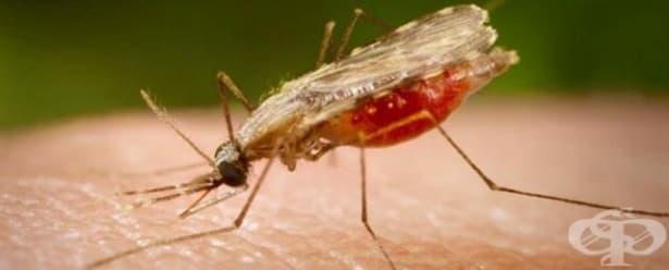 Нова комбинирана терапия против малария премина успешно клиничните тестове - изображение
