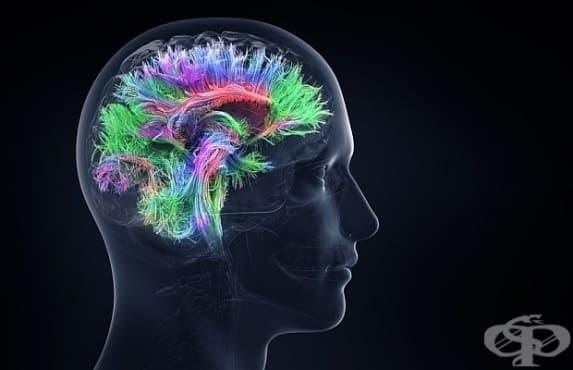 Учени откриха 40 нови гена, свързани с интелигентността - изображение