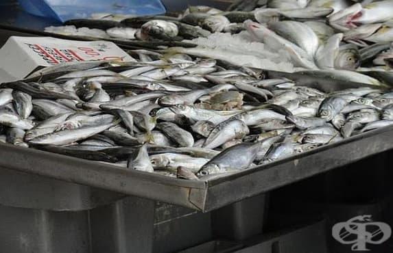 Активни потребители алармират за вредна риба на българския пазар - изображение