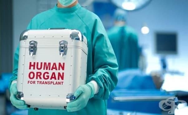 Протеин е отговорен за отхвърлянето на трансплантирани органи - изображение