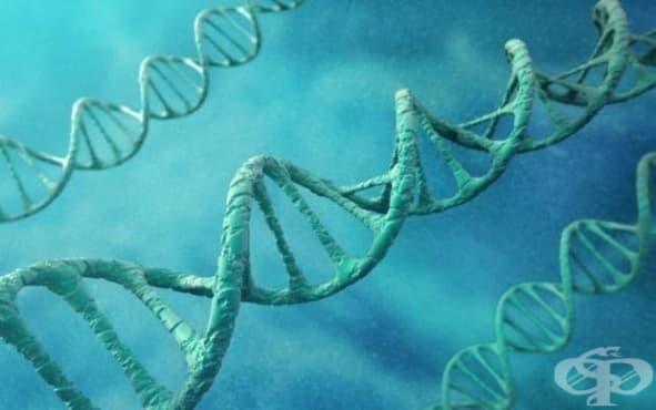 Откриха гени, свързани с хомосексуалността - изображение