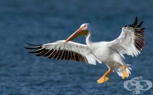 Отново върлува птичи грип, този път край езерото Сребърна - изображение