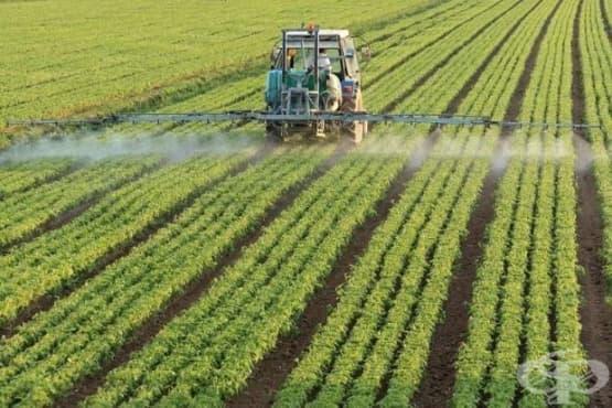 Нуждата от пестицидите за изхранването на човечеството е силно преувеличена  - изображение