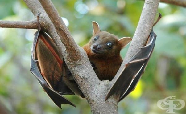 Изследване установи, че опасните вируси идват от прилепи, примати и гризачи - изображение