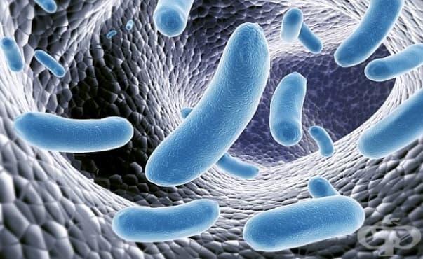 Според учени пробиотиците не са толкова ефективни - изображение