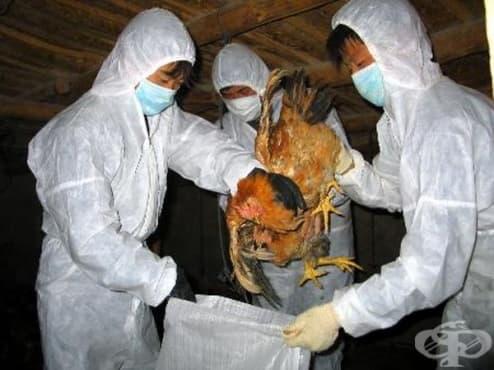 Втори случай на заразен човек с птичи грип в Хонконг - изображение