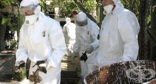 Мутиралият щам на птичи грип взе 8 жертви в Камбоджа - изображение