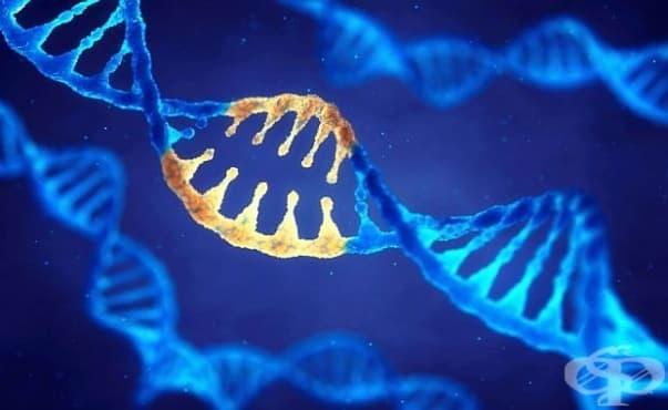 Учени за първи път коригираха ген вътре в човешкото тяло - изображение