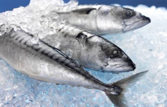"""Риба, уловена около авариралата """"Фукушима"""", е и в нашите магазини - изображение"""