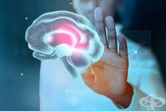 Учени откриха рядка форма на болестта на Алцхаймер, развиваща се в по-ранна възраст - изображение