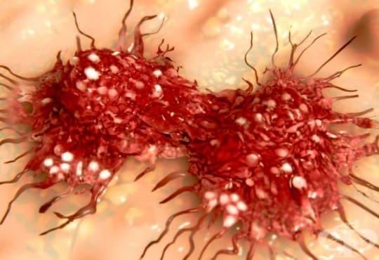 Бактерии на салмонела унищожават рака - изображение