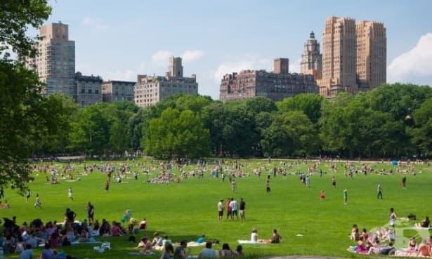 Учени: Следващият голям пробив в медицината трябва да се търси в градските паркове на Ню Йорк - изображение