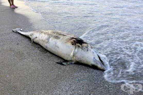Шарка е причината за смъртта на над 1200 делфина - изображение