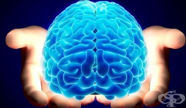 Шизофренията може да бъде лекувана с лекарства, които блокират или понижават клетъчната реакция - изображение