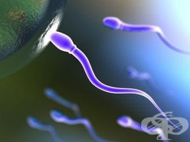 """Откриха """"лепилото"""" между сперматозоида и яйцеклетката - изображение"""