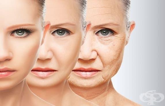 Учени откриха вещество, което може да обърне процеса на стареене - изображение