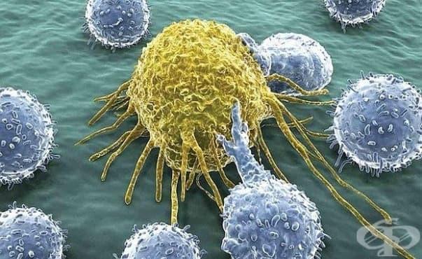 Инсулинът влияе и на имунната система - изображение
