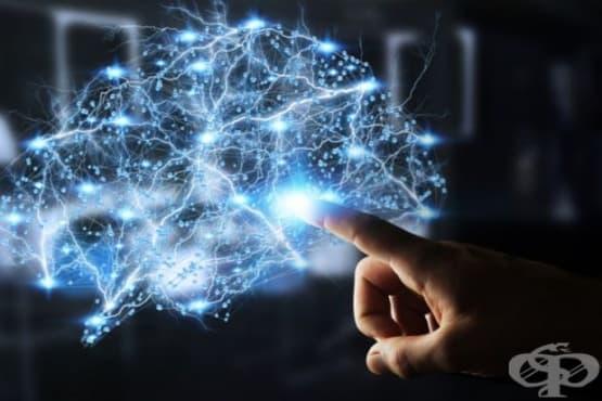 Търсят още отговори за синдрома на Даун, присаждайки човешки клетки на мишки - изображение